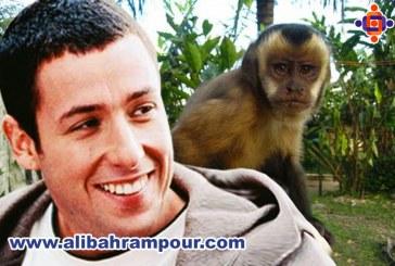 دانشمندان چگونه مفهوم پول را به میمون ها یاد می دهند؟